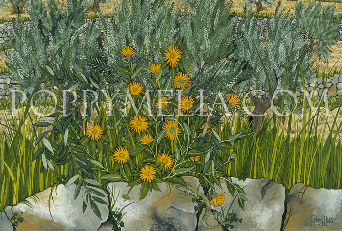 Calendula on Olive Terrace Painting by Poppy Melia
